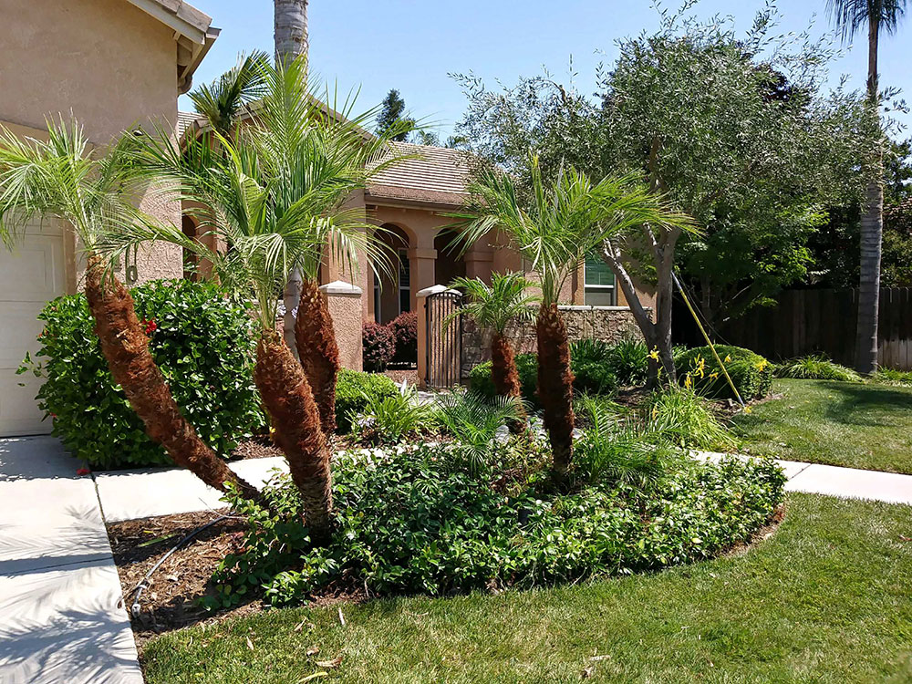 Landscape maintenance paul 39 s tree landscaping service for Tree and garden services